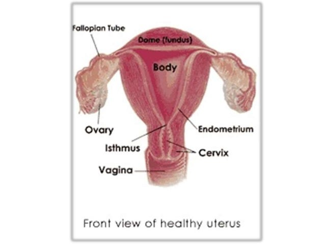 Anatomy of female geni...