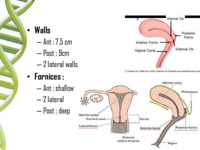 Anatomy of female genital tract