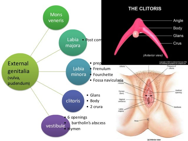 Anatomyof Female Genital Tract