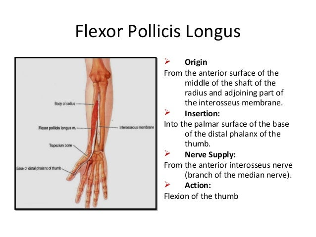 Anatomy of flexor compartment of forearm
