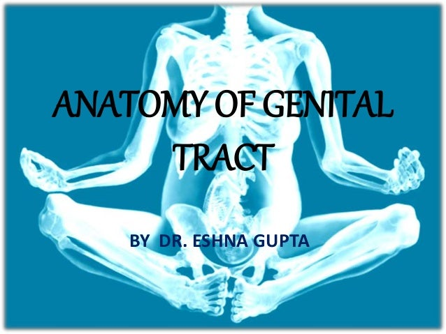 Anatomy of female external genital tract, urethra, urinary