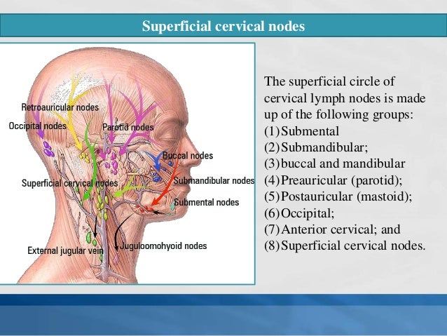 Lymph nodes of head & neck, Normal anatomy and its applied aspect