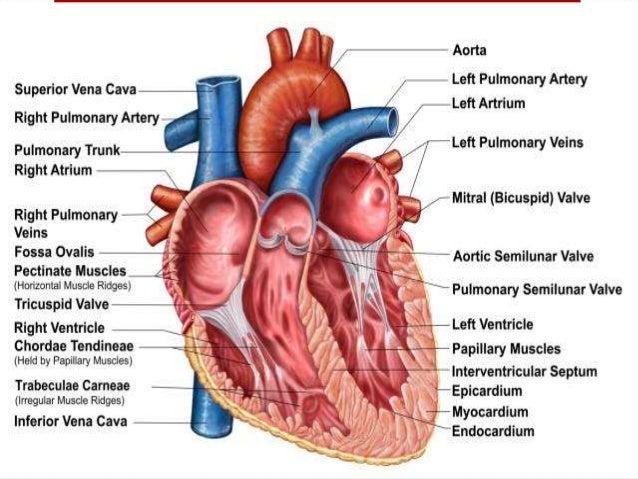 Ausgezeichnet Fingerstruktur Anatomie Bilder - Anatomie Von ...