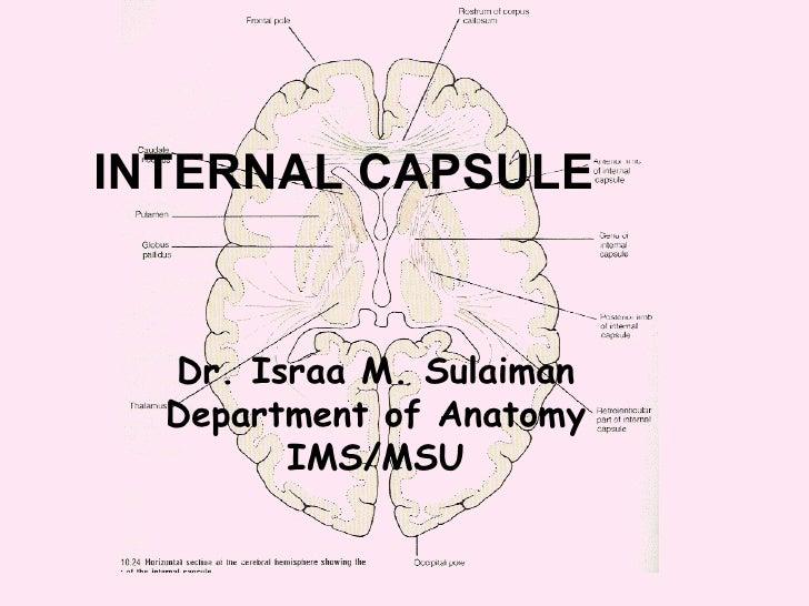 Anatomy of  internal capsule