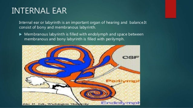 Anatomy Of Internal Ear And Physiology Of Hearing
