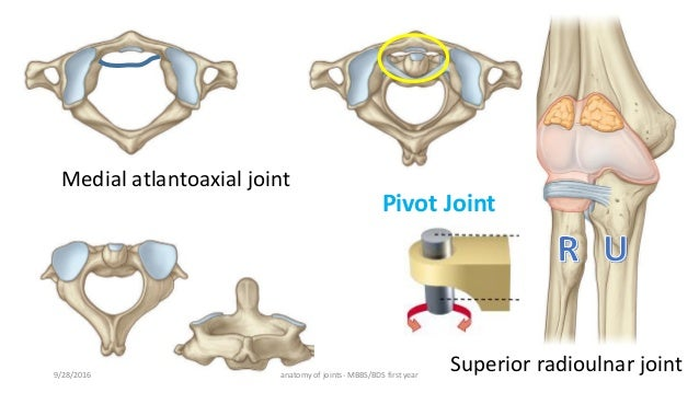 atlantoaxial joint