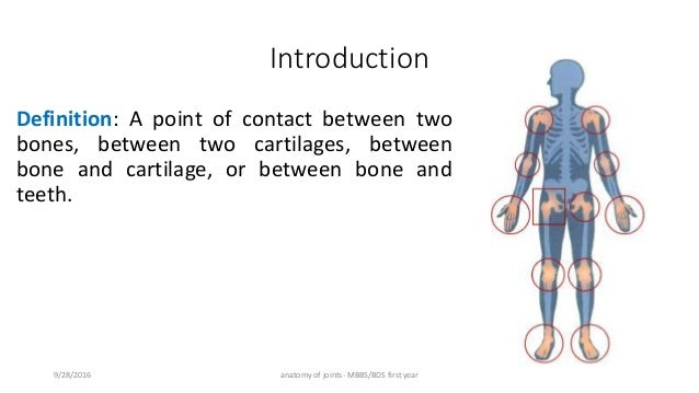 Anatomy of joints