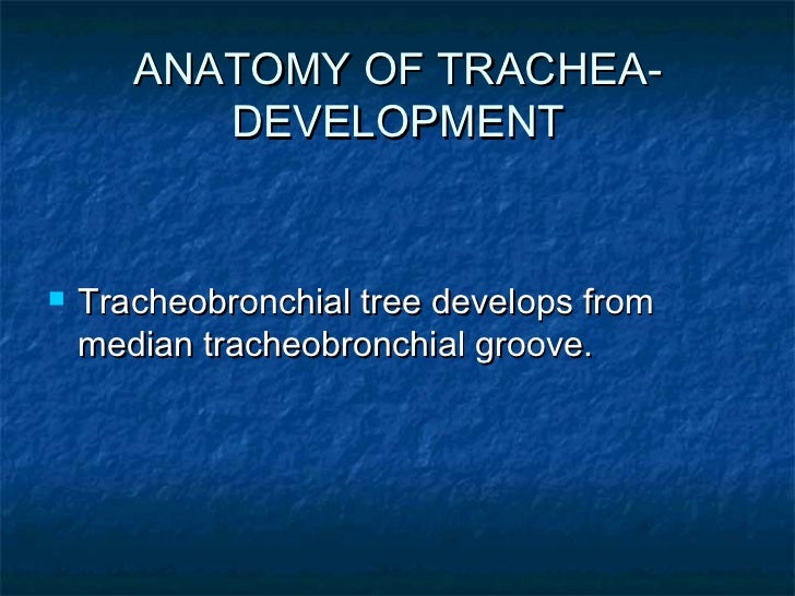 Anatomy of larynx and trachea final