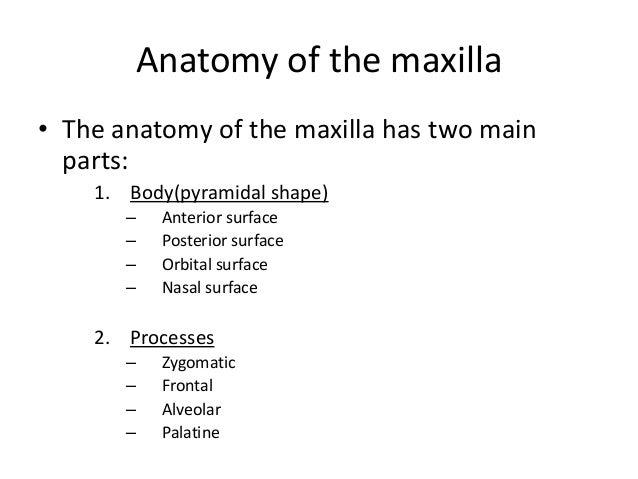 Anatomy of maxilla and mandible Slide 3