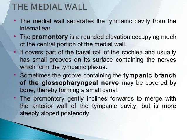 The region above the level of the facial nerve canal forms the medial wall of the epitympanum. The dome of the lateral s...