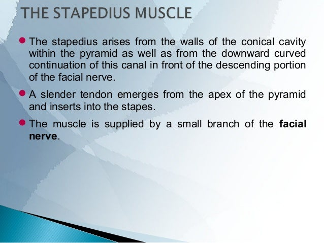 MacEwen's triangle is a direct lateral relation to the mastoid antrum and is formed by –  a posterior prolongation of the...