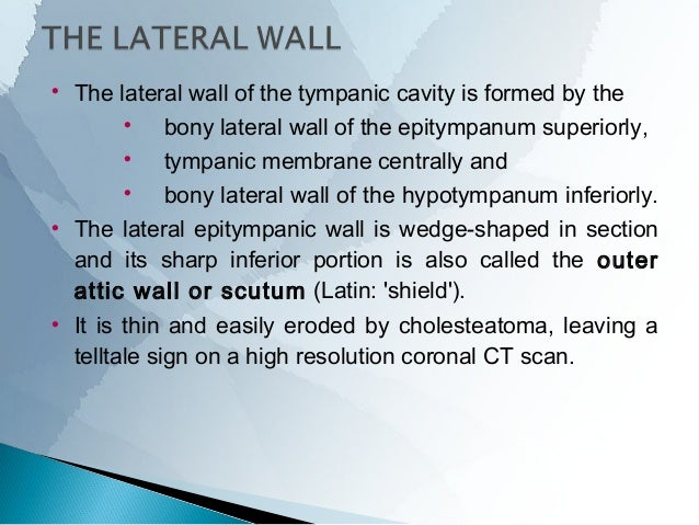 The nerve reaches the posterior bony canal wall just medial to the tympanic sulcus, enters the posterior canaliculus. It...