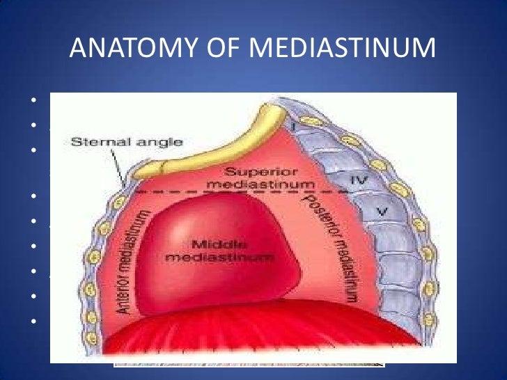 Anatomy Of Mediastinum And Its Disorders