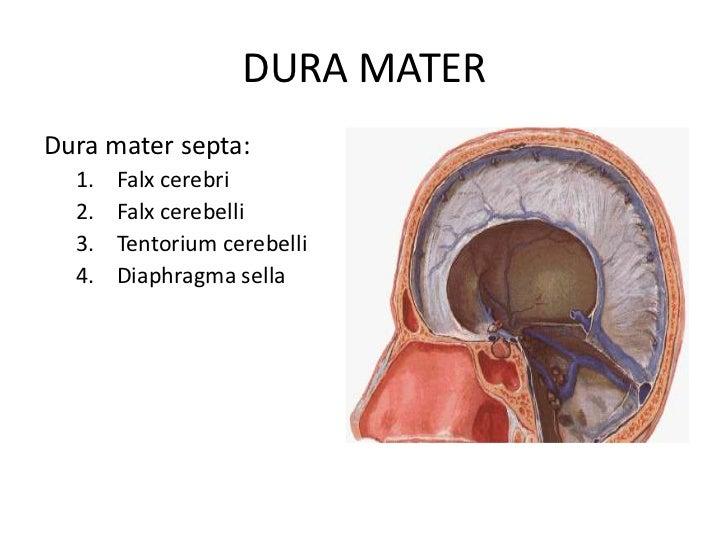 Labeled brain anatomy