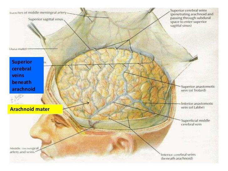 Anatomy of meninges, v...