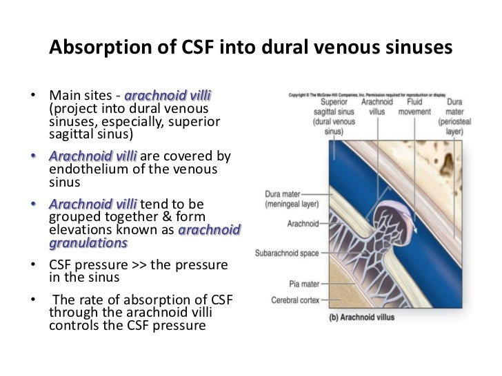 Anatomy of meninges, ventricles, cerebrospinal fluid