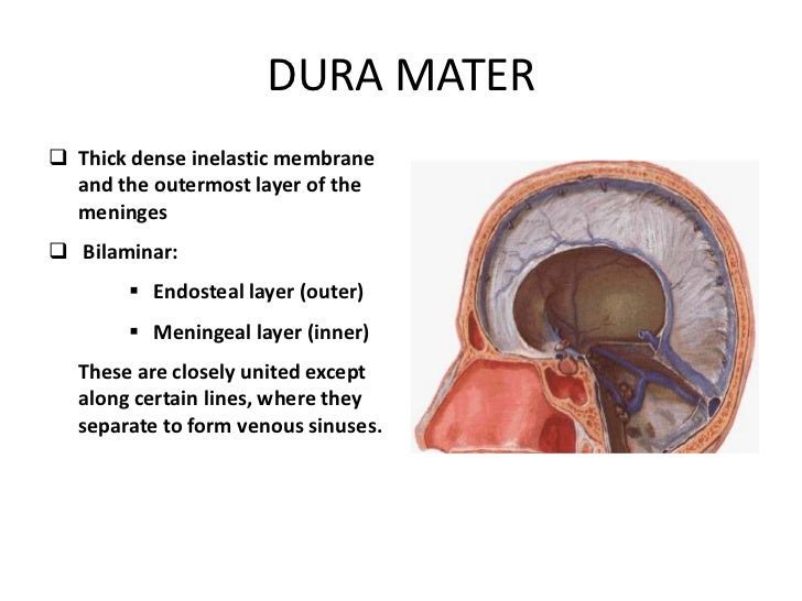 DURAL HEADACHE AND INNERVATION OF THE DURA MATER PDF