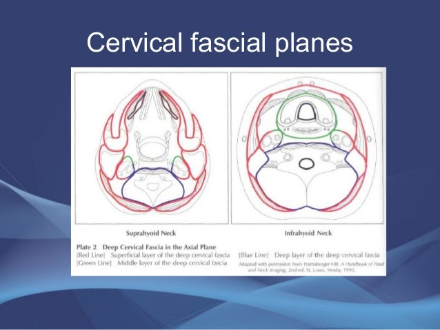 Anatomy of neck spaces and levels of cervical