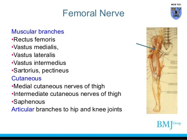 anatomy of nerve_injuries_lower_limb, Muscles