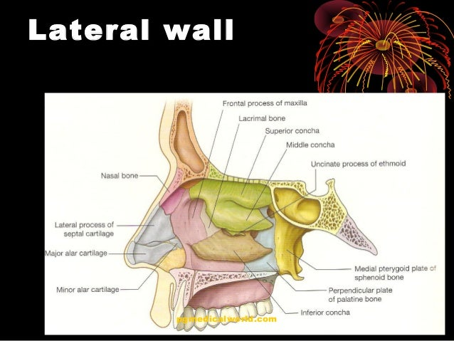 nasal anatomy ppt
