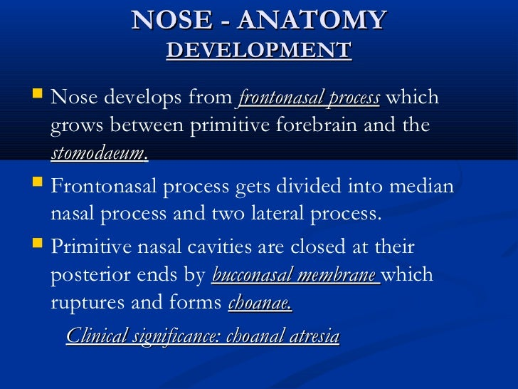 Anatomy Of Nose And Paranasal Sinuses