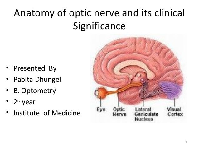 Anatomy of optic nerve and its clinical Significance • Presented By • Pabita Dhungel • B. Optometry • 2nd year • Institute...