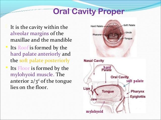 Anatomy of oral cavity pharynx larynx dr rajesh kumar for Floor of mouth anatomy