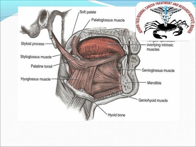 Anatomy Of Oral Cavity Pharynx Larynx Dr Rajesh Kumar