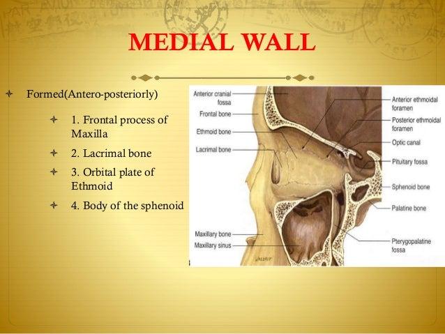 Zygomatic Bone Maxillary Process Anatomy of orbit sivat...