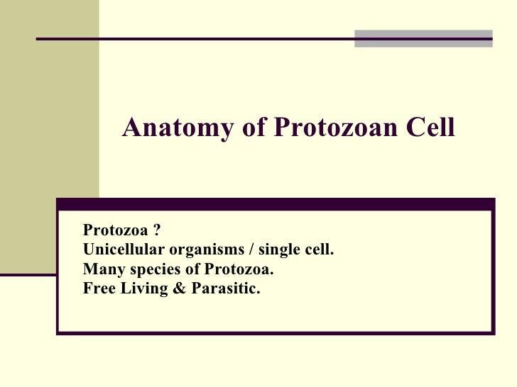 Anatomy of Protozoan Cell Protozoa ?  Unicellular organisms / single cell. Many species of Protozoa. Free Living & Parasit...