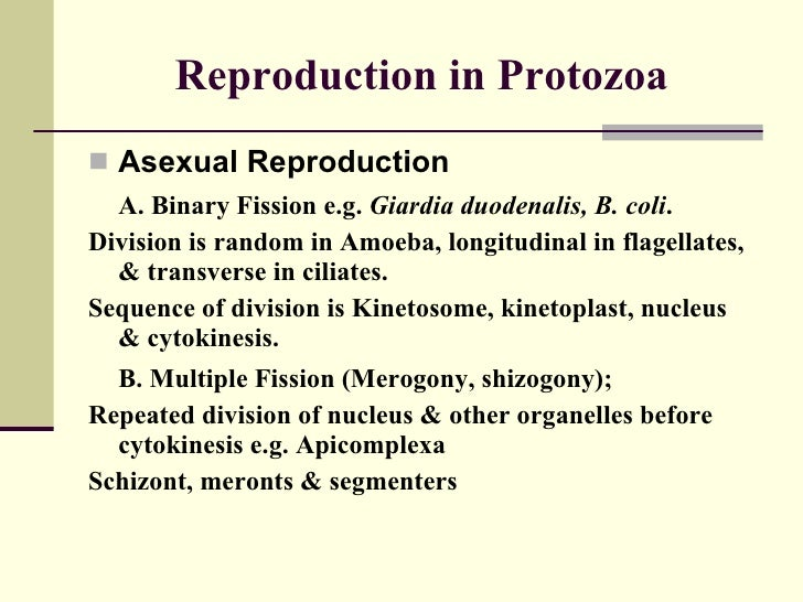 Protozoa asexual reproduction pictures