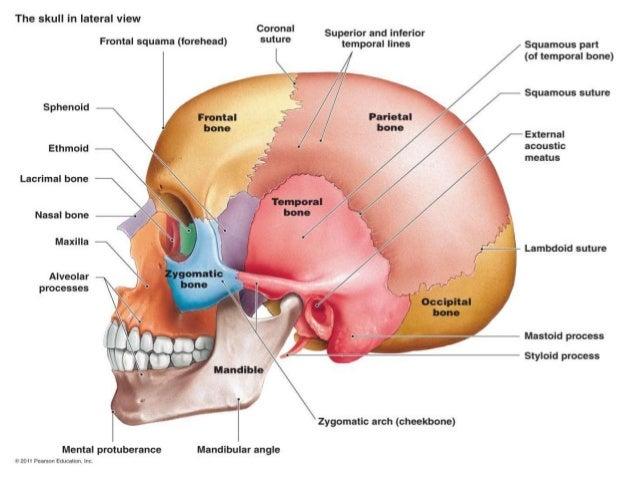 Anatomy of pterygopalatine fossa, infra temporal space