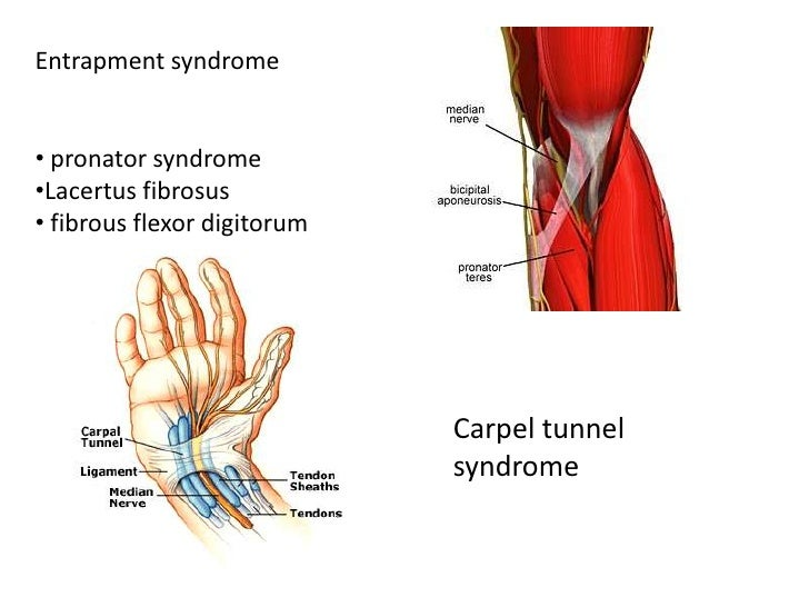 Anatomy of radial,median &ulnar nerve