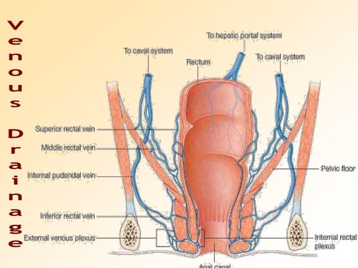Anatomy of Rectum