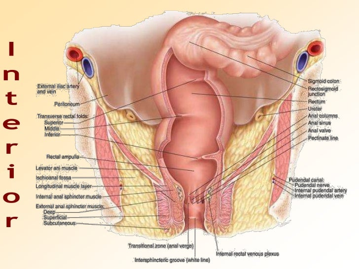 Female anal cavity pictures