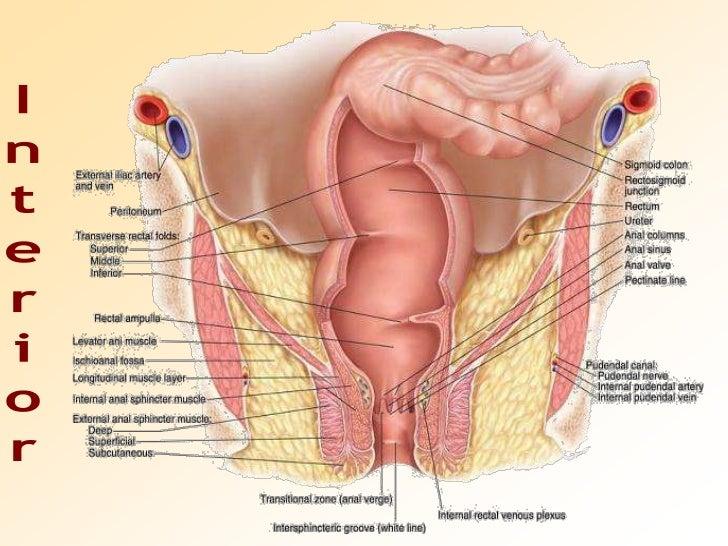 Pictures Of The Female Anus