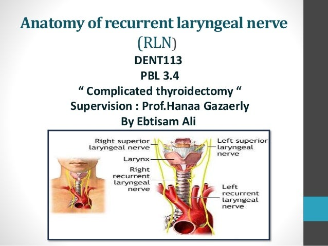 Anatomy of recurrent laryngeal nerveAnatomy of recurrent laryngeal ne…