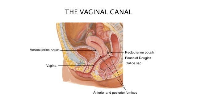What does a smelly vagina mean