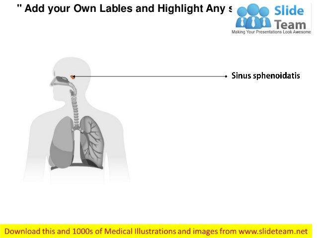 Respiratoryanatomy Power Point: Anatomy Of Respiratory System Medical Images For Power Point