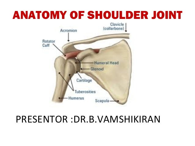 Anatomy of shoulder joint - vamshi kiran