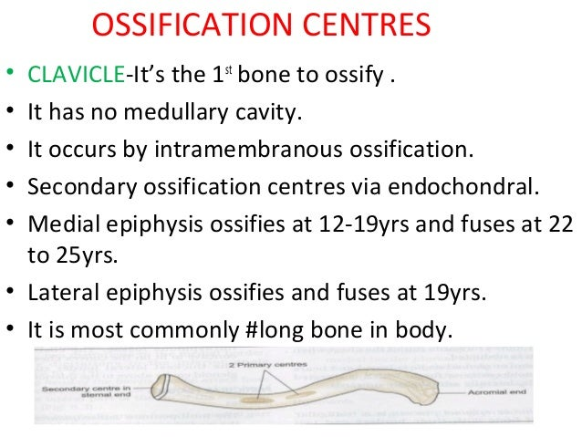 clavicle ossification