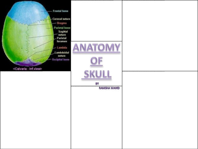 The Exterior of the Skull• The skull as a whole may be viewed from  different points, and the views so obtained are  terme...
