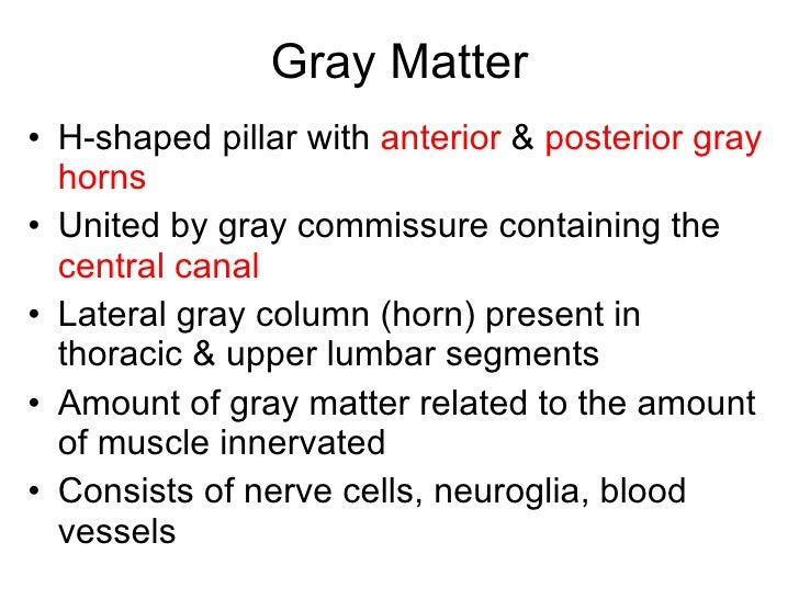 Structure Of The Spinal Cord; 14. Gray Matter ...