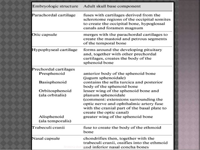 anatomy of temporal bone and skull base, Human Body