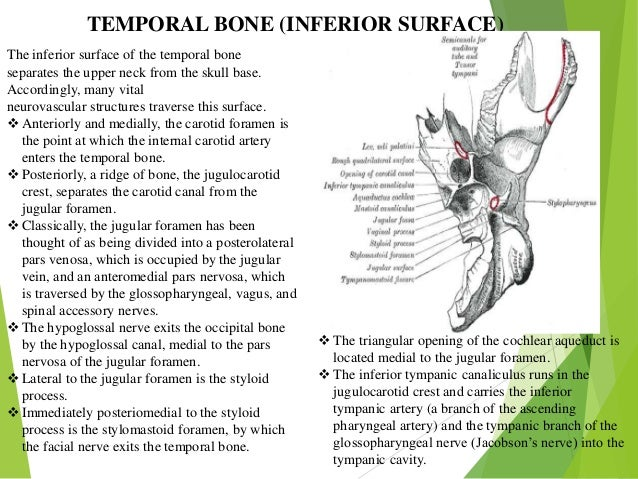 Surgical anatomy of temporal bone