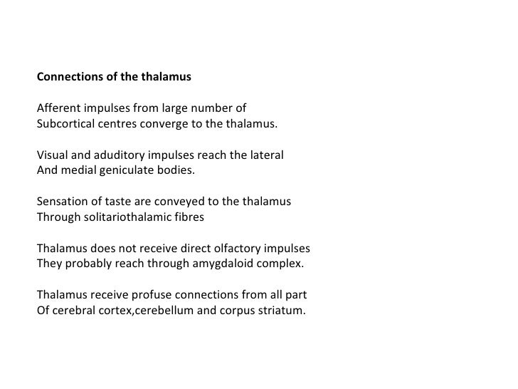 Anatomy Of Thalamus