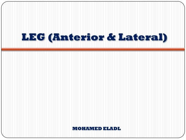 LEG (Anterior & Lateral) MOHAMED ELADL