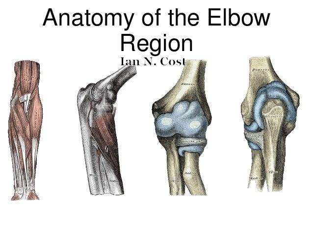 Anatomy of the elbow region