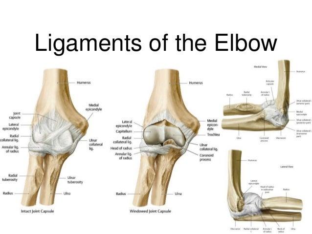 Elbow Region Diagram Complete Wiring Diagrams
