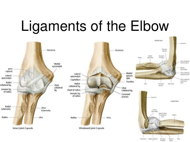 anatomy of the elbow region, Human Body
